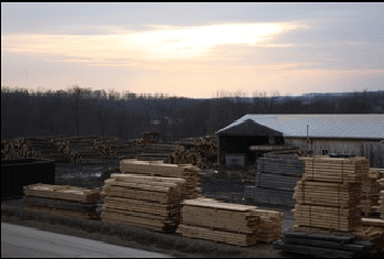 Eastern White Pine Capital Forest Products